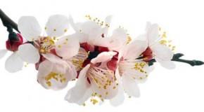 Çiçek Resimleri, Çiçek Fotoğrafları