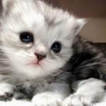 Kedi Resimleri